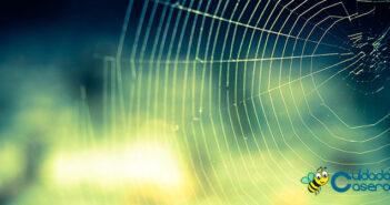 Repelente de arañas casero