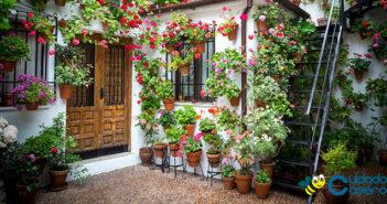 Cuidar de las plantas en casa