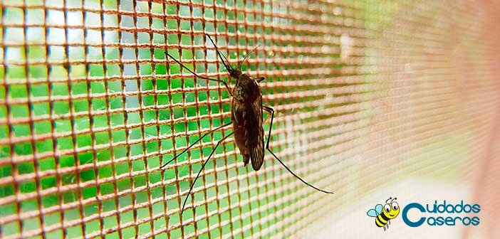 Trucos para repeler a los mosquitos