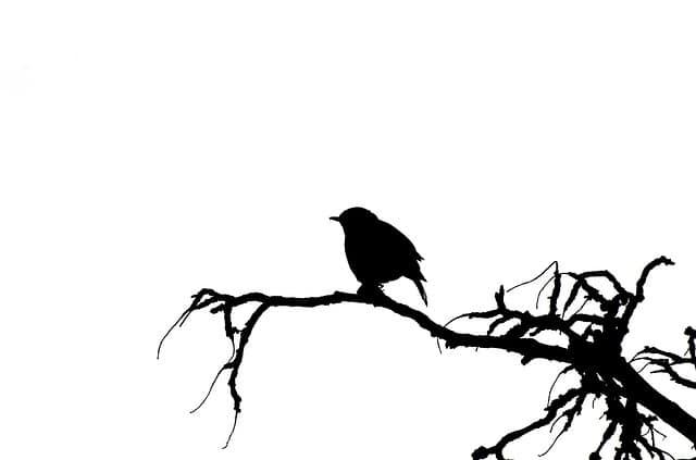 Pájaro para tatuaje