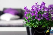 Hábitos en el hogar que hace sentirnos bien